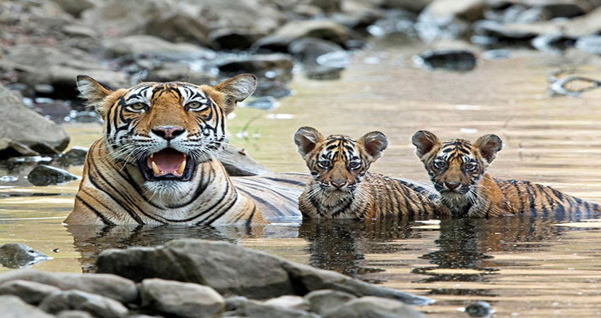 Indian-Wildlife